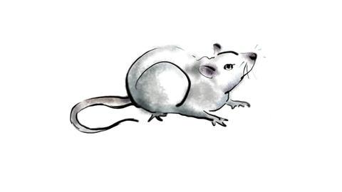Zodiac Rat Stock Video Footage