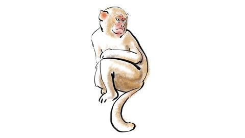 Zodiac Monkey Stock Video Footage