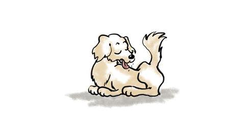 Zodiac Dog Stock Video Footage