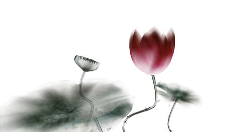 Chinese Calligraphic Lotus Stock Video Footage