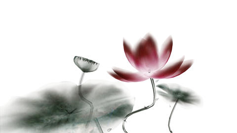 Chinese Calligraphic Lotus Animation