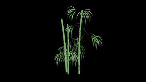 Bamboo Leaf Swaying Stock Video Footage