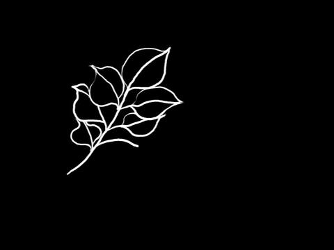Leaf Animation