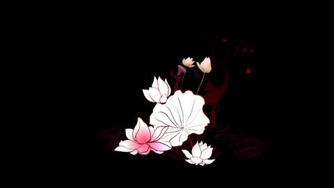 Lotus Stock Video Footage