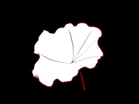 Lotus Leaf Stock Video Footage
