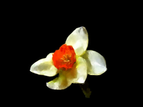 Watercolor Painting - Daffolid (Red) Animation