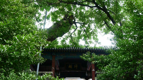Chinese ancient building under the green trees Stock Video Footage
