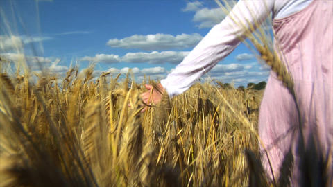 10710 womans hand brushing over wheat field wide Stock Video Footage