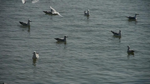 seagull flying in sea Stock Video Footage