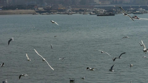 Tourists feeding flying seagulls on jetty.distant... Stock Video Footage