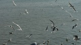 Tourists feeding flying seagulls on jetty.distant villages.Yachts ship boat &amp Footage