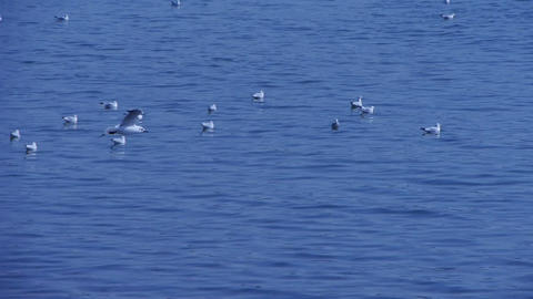 Many seagull flying in sea beach Stock Video Footage