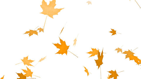 HD Loopable Falling Maple Animation Stock Video Footage