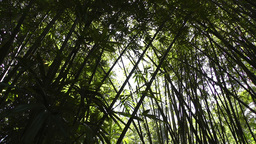 Bamboo Forest 01 lowangle Stock Video Footage