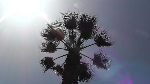 Palm Tree under blue sky against Sun silhouette Stock Video Footage
