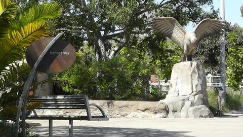 San Diego Zoo 02 Stock Video Footage