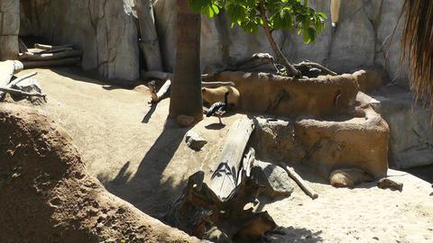 San Diego Zoo 10 Stock Video Footage