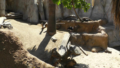 San Diego Zoo 10 Stock Video Footage