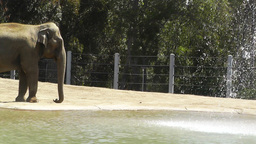 San Diego Zoo 16 elephant Stock Video Footage