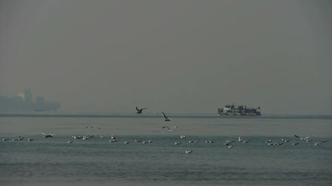 seagull on sea,Yachts ship boat traveling through Stock Video Footage