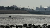 A dig clams fishermen on beach,ebb Footage