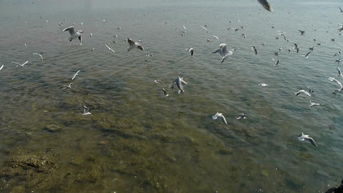 Many seagull flying in sea,reef Stock Video Footage