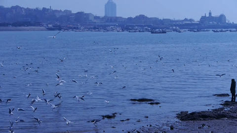 Many seagull flying in sea,reef,Seaside dams of QingDao... Stock Video Footage