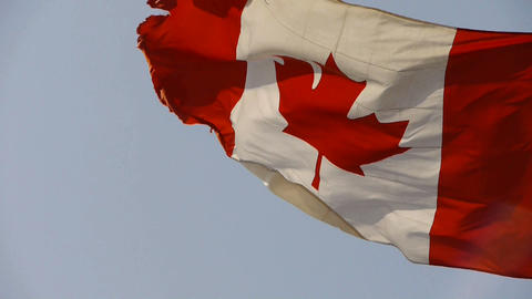 Canada flag is fluttering in wind Stock Video Footage