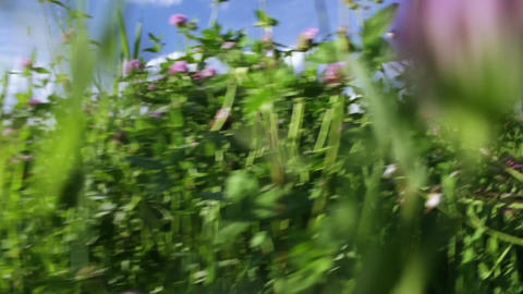 Through the grass Stock Video Footage