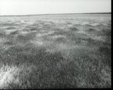 Wind over the field, vintage b&w 16mm footage Footage