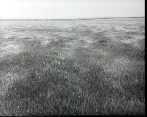 Wind over the field, vintage b&w 16mm footage Stock Video Footage