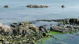Ocean water surface and rock reef coastal,algae,seaweed,ebb,horizon,skyline Footage
