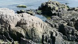 Ocean water surface and rock reef coastal,algae,seaweed,ebb,gravel,skyline Footage