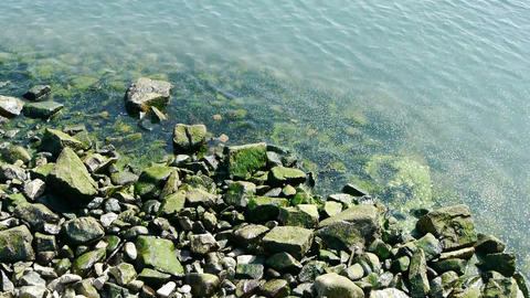 Ocean water surface and rock reef coastal,algae,seaweed,ebb,gravel,pollution Footage