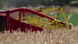 Combine harvesting ripe wheat detail Stock Video Footage