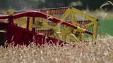 Combine harvesting ripe wheat detail Footage