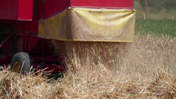 Combine releasing hay during wheat harvest Stock Video Footage