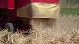 Combine releasing hay during wheat harvest Footage