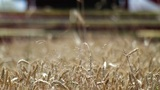 Wheat harvest detail Footage