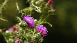 Butterfly landing on purple wild flower Stock Video Footage