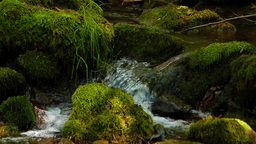 Forest stream clean fresh water running over mossy rocks Stock Video Footage