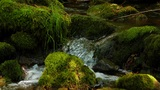 Forest stream clean fresh water running over mossy rocks Footage