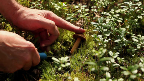 mushroom picking Stock Video Footage