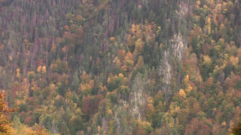 Zoom on some steep mountains covered by forests 81 Footage