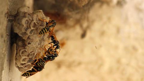 Wasp nest Footage