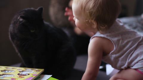 Little baby girl strokes a cat Footage