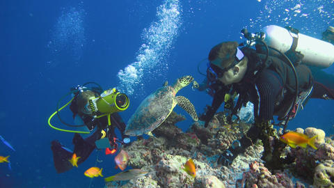 A fascinating dive with the Hawksbill turtles. Diving on the reefs of the Maldiv Footage