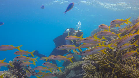 Underwater videographer shoots a flock of tropical fish. Exciting underwater div Footage