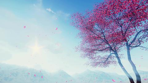 Petals falling from flowering sakura tree in slow motion Footage