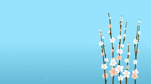 4K Easter Blossom Sakura With Flowers On Blue Background... Stock Video Footage